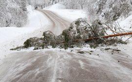 Träd blockerar vägen