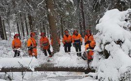 Personal från kommunen får utbildning i hur man på ett säkert sätt tar hand om stormfälld skog